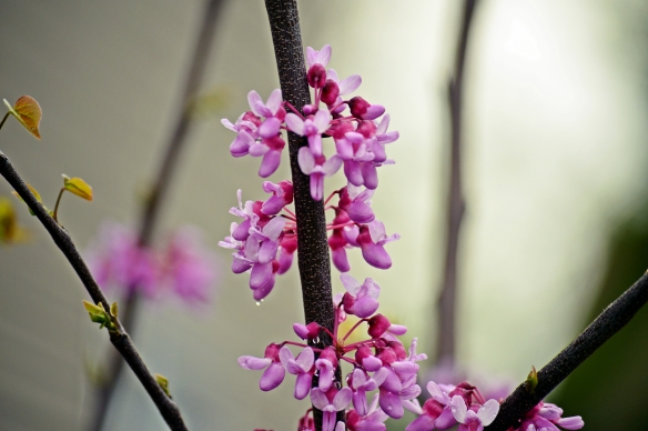 """""""It is spring again. The earth is like a child that knows poems by heart.""""   ~ Rainer Maria Rilke"""