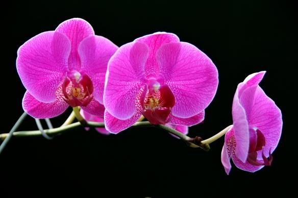 Orchids 2013 Krohns 368