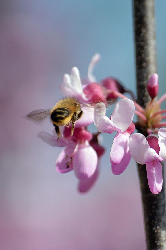 spring 010