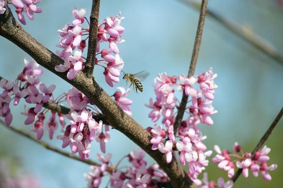 spring 015